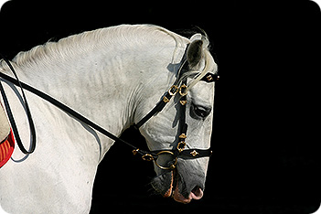 Horse Bridles • Types Of Horse Bridle