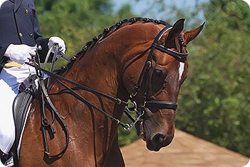 Equestrian and Horse - Tack - Equipt