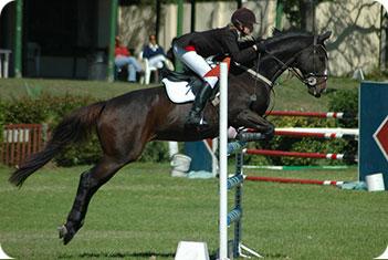 Horse_Jumping_1597014.jpg